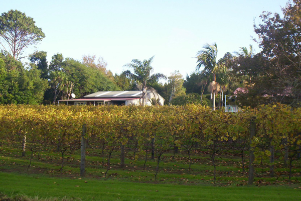 autumn winter vineyard